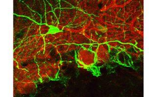 Comment trouver son partenaire synaptique