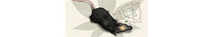 Un rôle clé pour les récepteurs CB1 astrocytaires et la D-sérine dans la mémoire