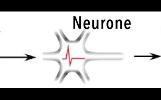 De nouveaux mécanismes à l'origine de la migraine
