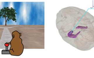 Des neurones de schéma dans le cerveau