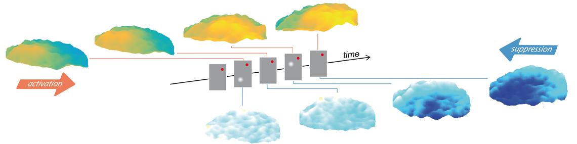 Des vagues corticales pour façonner la représentation du mouvement visuel
