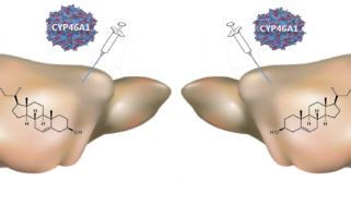 Réguler le métabolisme du cholestérol protège les neurones