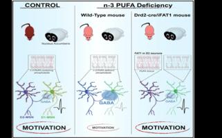 Un lien causal entre une diminution des taux d'acides gras polyinsaturés et des déficits motivationnels